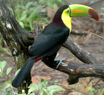 The MB Spirit Animal Guide Toucan